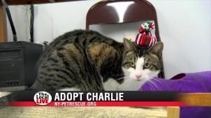 Adopt Charlie