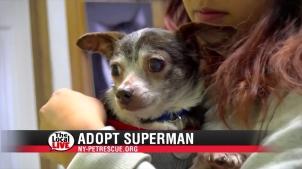 Adopt Superman-2