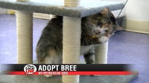 Adopt Bree