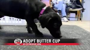 Adopt ButterCup