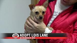 Adopt Lois Lane