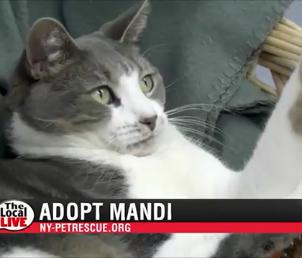 Adopt Mandi