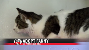 Adopt Fanny