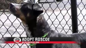 Adopt Roscoe