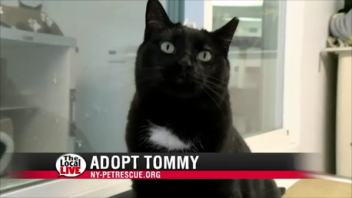 Adopt Tommy
