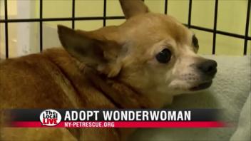 Adopt Wonderwoman