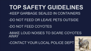 Top Safety Guidelines-Coyotes in MMK